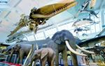 10 экспонатов музея естествознания в лондоне, которые стоит увидеть