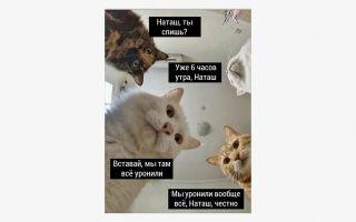 12 мемов на английском языке с самыми смешными ошибками