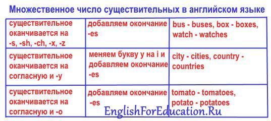 Множественное число существительных в английском языке: образование и примеры