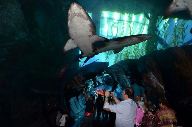 Лондонский аквариум: цена, билеты и советы