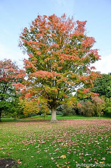 Королевские ботанические сады kew gardens