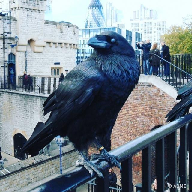 Что делать в Лондоне неделю?