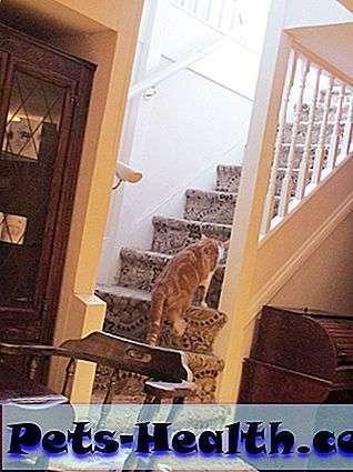 Кото-кафе «cat emporium» в Лондоне