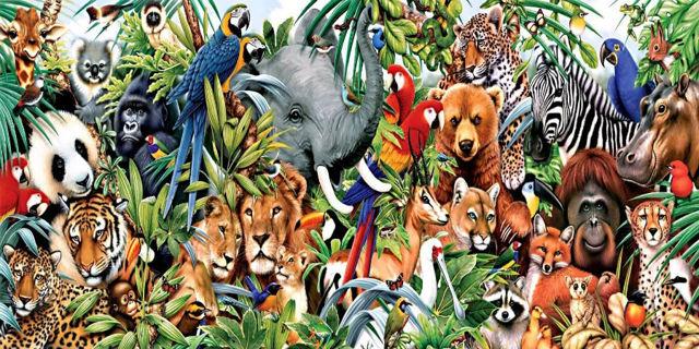 Идиомы про животных на английском: 9 самых популярных