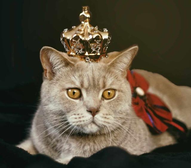 10 самых популярных «усатых» английских идиом о кошках