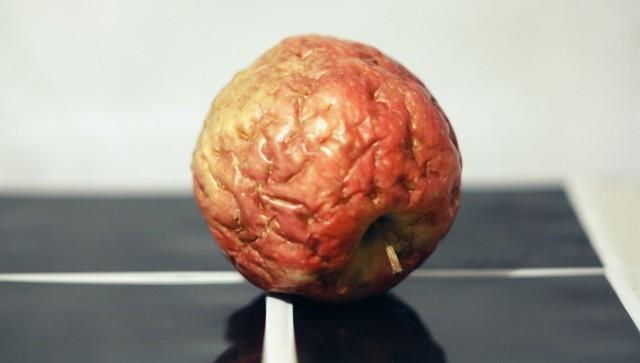 Идиомы на английском языке о фруктах: 13 самых сочных