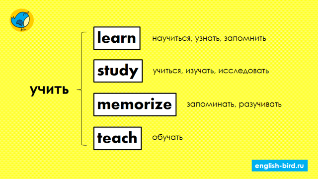 Различия между синонимами learn, study, cram, know, scrutinize, educate, bring up, teach, train, drill, examine